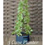 3 and 6 Cane Patio Planters