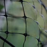 Deer Protection Netting