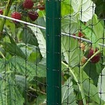 Deluxe 4 ft High Vegetable Cage