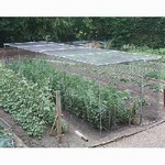 Heavy Duty Fruit and Vegetable Cage