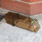 Humane Single Mouse Trap