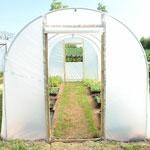 Polytunnels and Mini Tunnels