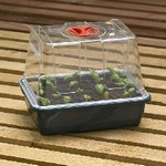 Quarter Seed Tray Covers Pack of 12