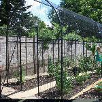 Roman Arch Fruit and Vegetable Cage
