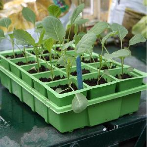 Seed Tray Growing And Propagation Lids From Propagation