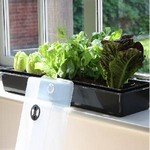 Self Watering Windowsill Propagator