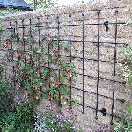 Steel Rod Wall Trellis Panel