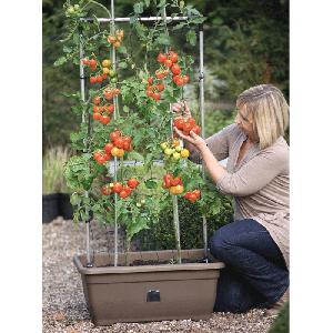 Tomato Success Kit From Patio Growing Allotment Shop