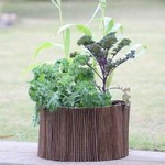 Vegetable Planter & Willow Surround