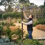 Wisteria Umbrella Support Frame