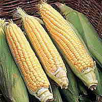 Sweetcorn Seeds