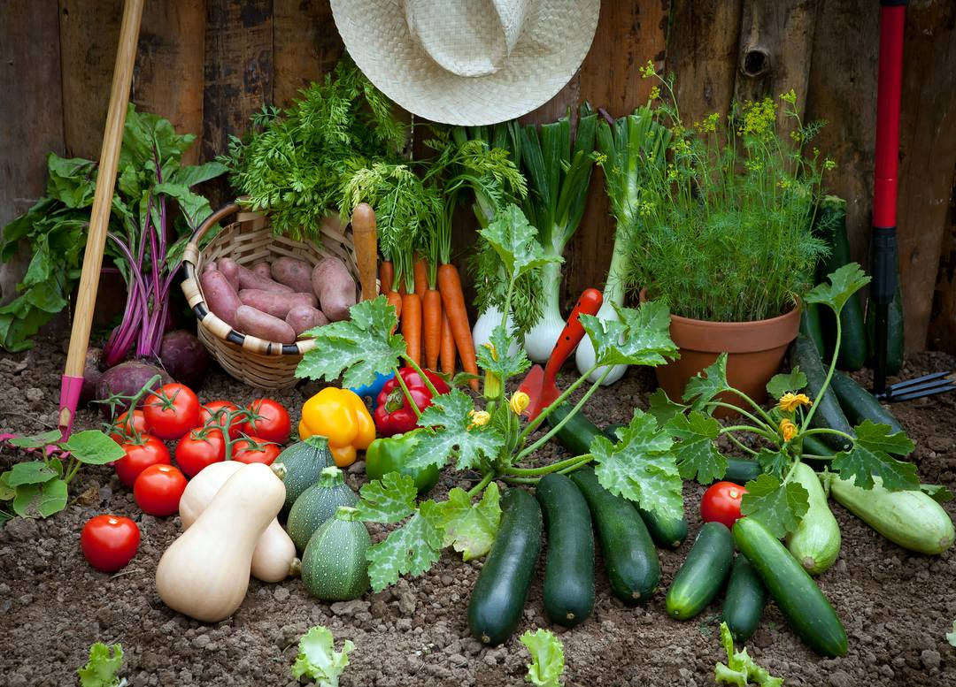 Vegetable Growing How To Grow Vegetables Guides Advice