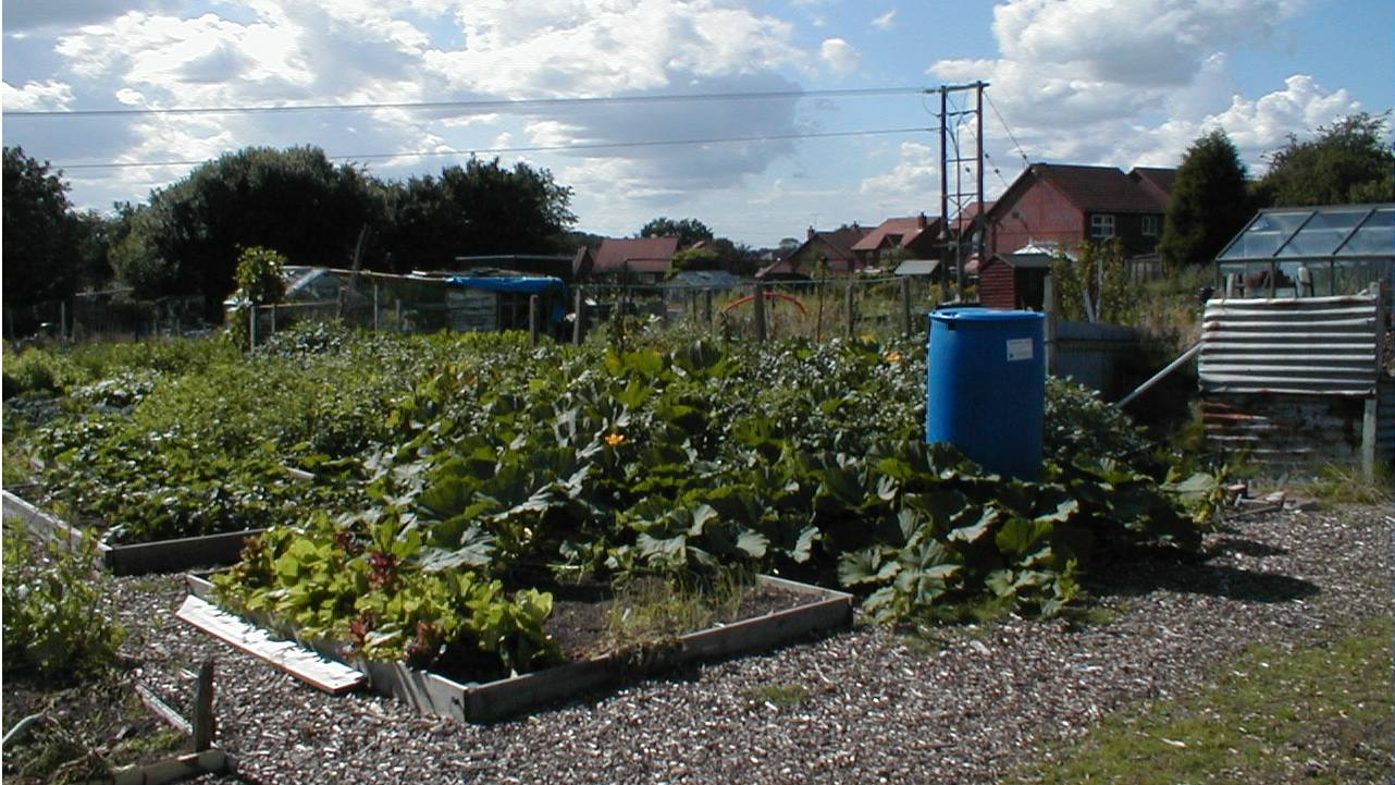 Allotment Information