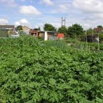 Allotment Journey - A Step to Sustainable Living