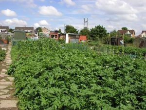 Allotment Sustainable Living