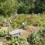 Allotments - Some Tips to Get You Started