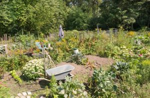 Allotment Starting Tips