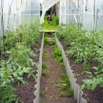 Growing in a Polytunnel in April