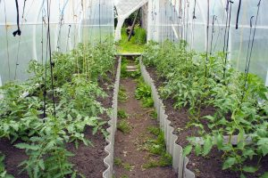 April Polytunnel
