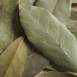 Growing Bay Leaf Trees - How to Grow a Bay Leaf Tree
