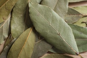 How to Grow Bay Leaf