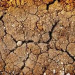 Improving Clay Soils, Methods & How to Improve Clay Soils