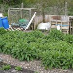 Location & Preparing the Comfrey Bed