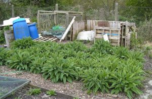 Comfrey Bed Compost Heaps