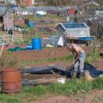 About Allotments Books