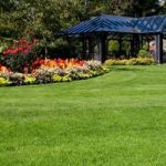 Lawn Care Guides and Advice