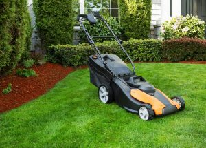 Lawn Care Monthly Guide