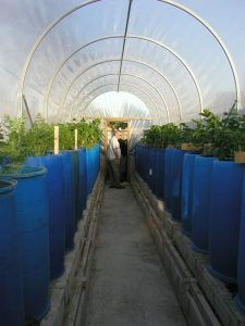 May Polytunnel