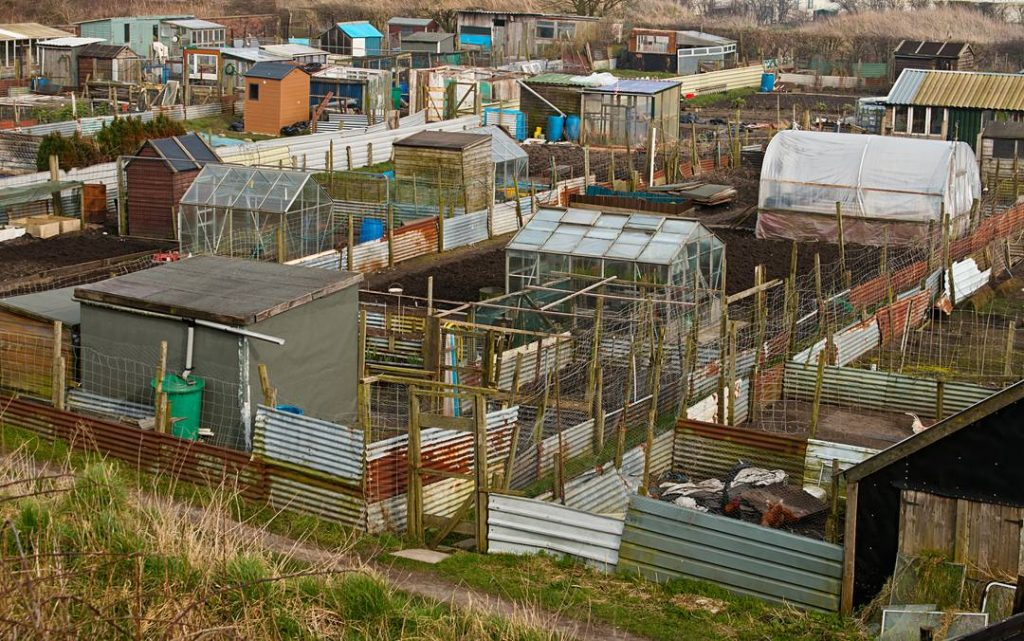 Modern British Allotment