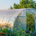 Polytunnels for Productivity