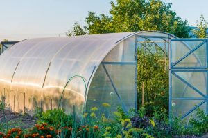 Productive Polytunnel