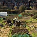 Allotment History - A Brief History of Allotments in the UK