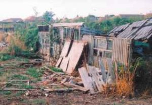 Derelict Allotment Plots