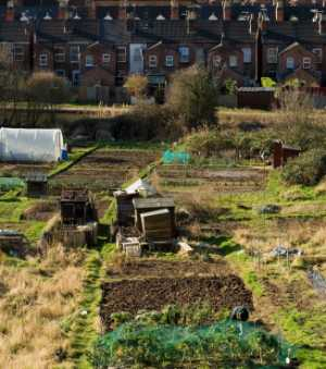 Allotment History