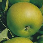 Growing Apples - How to Grow Apples