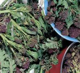 How to Grow Broccolli