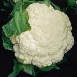 Growing Cauliflower - How to Grow Cauliflower