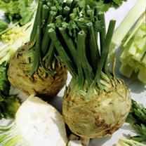 How to Grow Celeriac