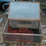 Cold Frames - Extending The Usefulness of a Cold Frame