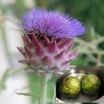 Growing Globe Artichokes - How to Grow Globe Artichokes