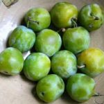 Growing Greengages - How to Grow Greengages