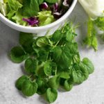 Growing Landcress - How to Grow Landcress