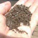 Mycorrhizal Fungus & Kelp or Seaweed Meal