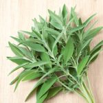 Growing Sage - How to Grow Sage