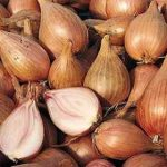Growing Shallots (Allium ascalonicum) - How to Grow Shallots