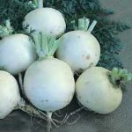 Growing Turnips - How to Grow Turnips